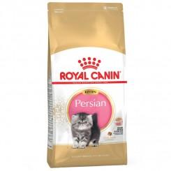 Kitten Persian 10 kg.