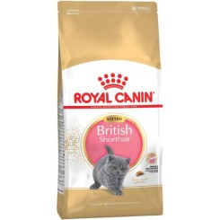 British shorthair Kitten 10 kg.