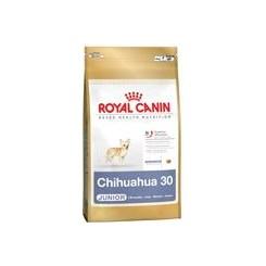 Chihuahua Junior 1,5 Kg.